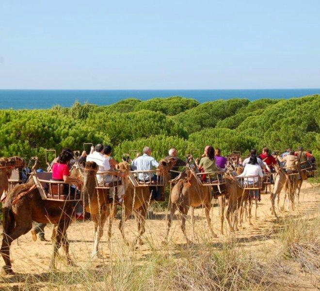 camellos Doñana